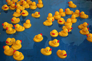 Photo of a large group of rubber ducks in water.