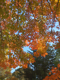 Fall New England Colors
