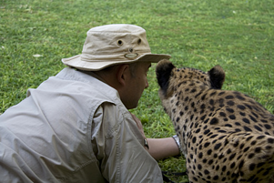 Volunteer with Cheetah.