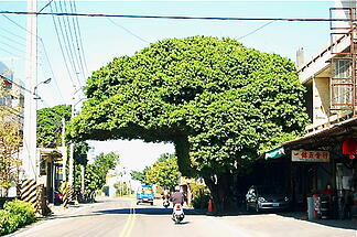 helmet tree in Taiwan