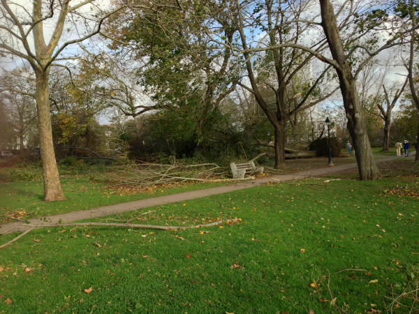 Storm damage on the Guilford Green