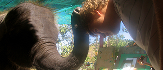 Playing with an elephant in Thailand